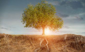 Shamanic Tree Roots